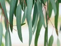 பாக்கெட் சானிடைசர் கம் பேஸ்மாஸ்க் ஸ்ப்ரே- நாட்டிலேயே முதன்முறையாக உதகையில் தயாரிப்பு!