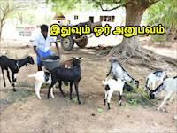 கௌரவம் பார்க்காமல் ஆடு வளர்ப்பில் அசத்தி வரும் பொறியியல் பட்டதாரி