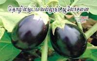 காந்தி கிராம வேளாண் அறிவியல் மையம் உருவாக்கிய புதிய ரக ஒட்டுக்கத்தரி