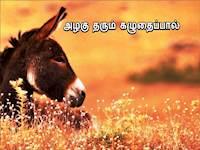 லாபம் கொழிக்கும் தொழிலாக மாறிவரும் கழுதை வளர்ப்பு: மக்கள் மத்தியில் வரவேற்பு