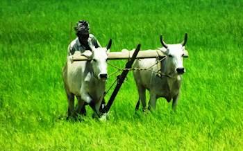 கரோனா காலகட்டத்தில் விவசாயிகள் கடைபிடிக்க வேண்டிய வழிமுறைகள்