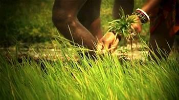 வேளாண் அறிவியல் நிலைய திட்ட ஒருங்கிணைப்பாளர் வழங்கும் ஆலோசனை