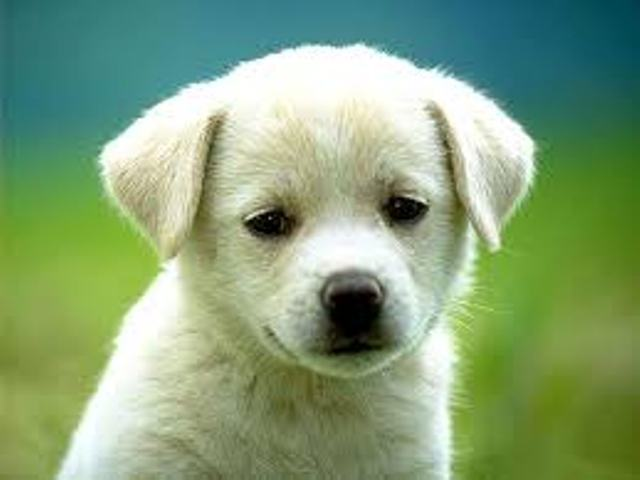 Pet Animals Small Breeds