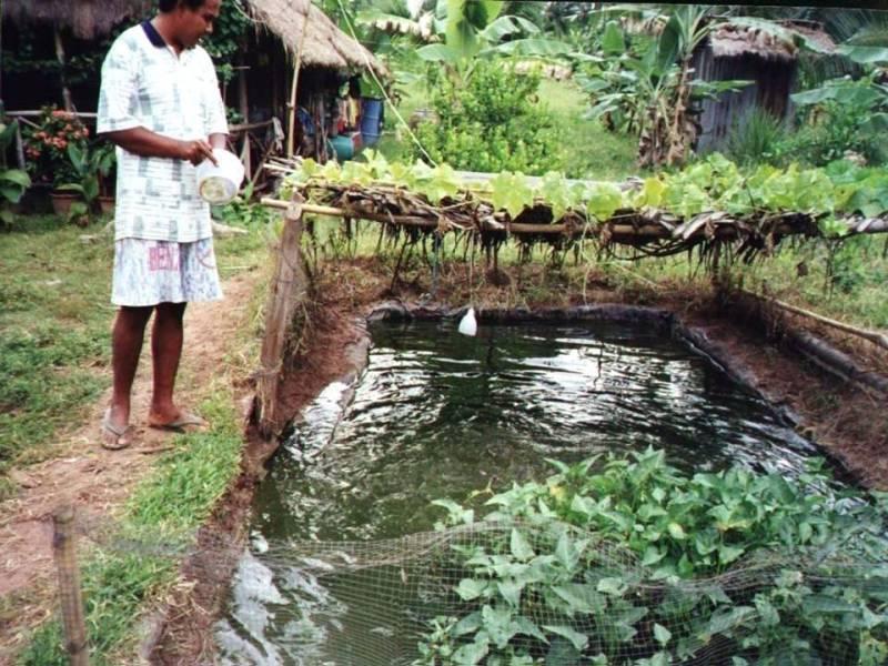 Backyard Fish farming