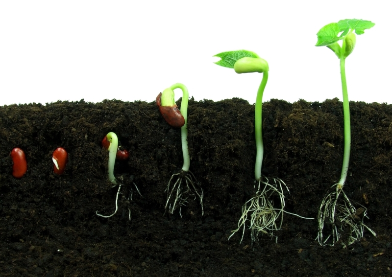 Stages of Growing Seed