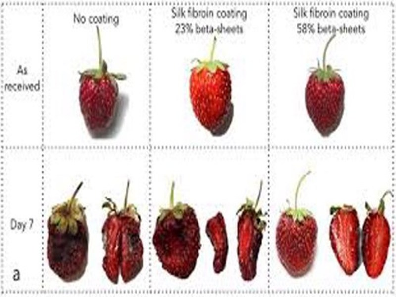 fruits waste