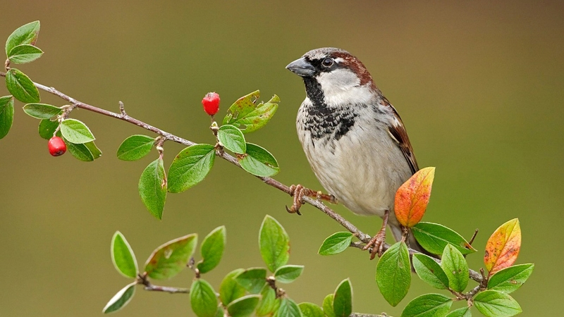 Beautiful Sparrow