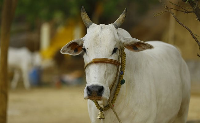 commercializing cow by-products