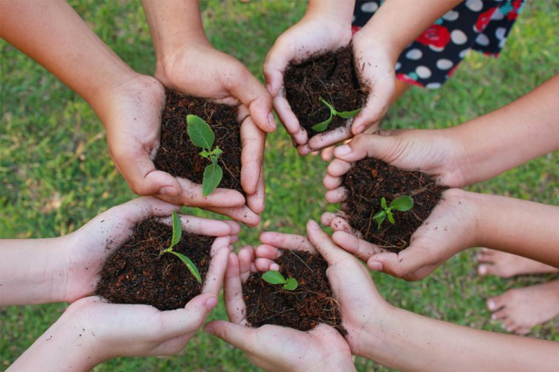 saplings