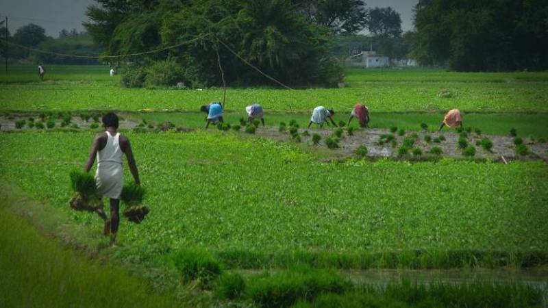 Farmer Scheme