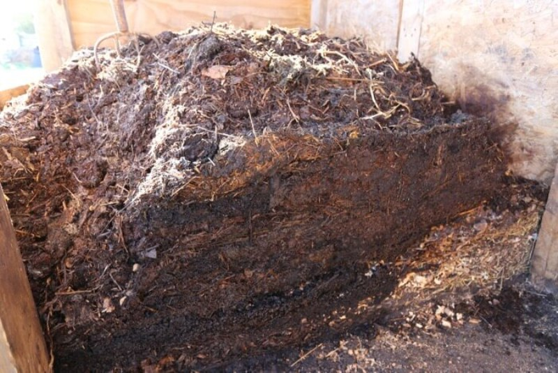 Cow Dung Compost