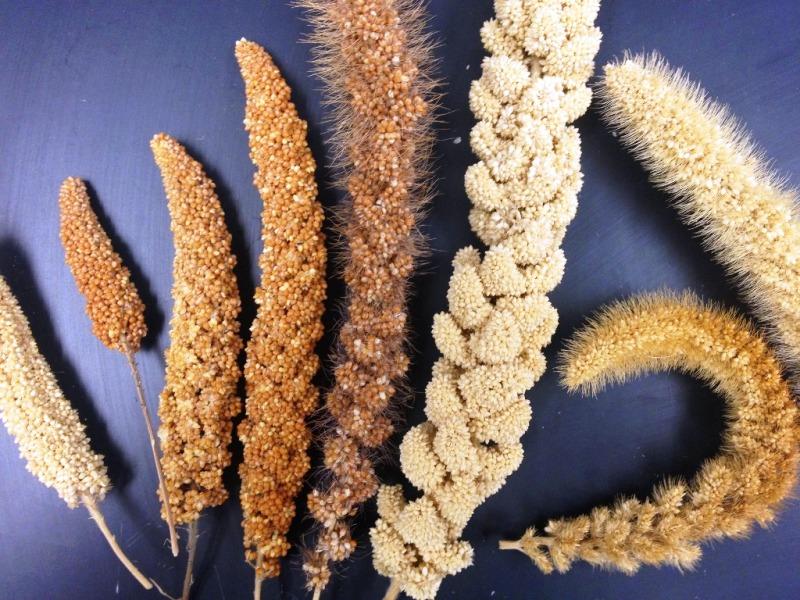 Millets Diversity