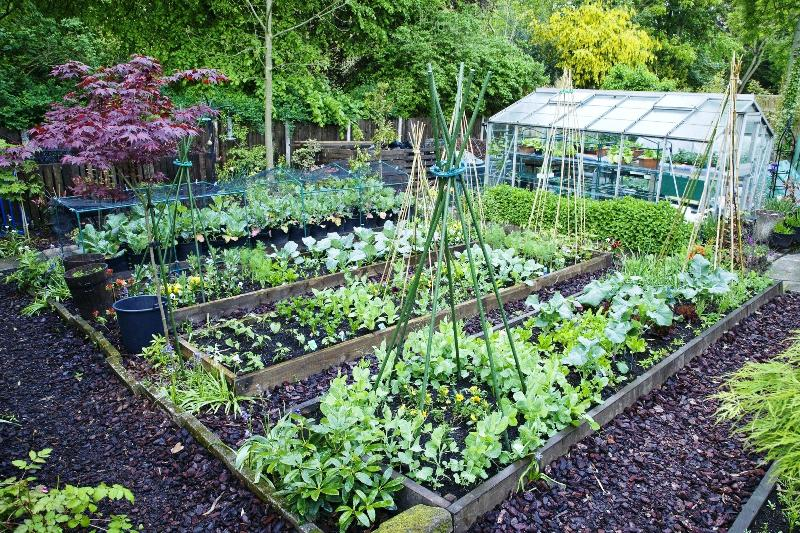 Guide To Starting Vegetable Gardens