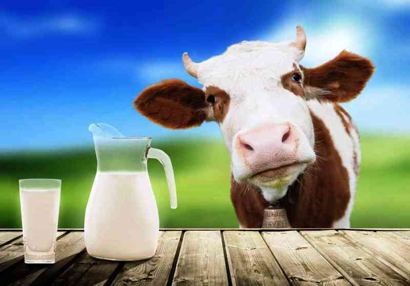 Cows Milk Nutritious
