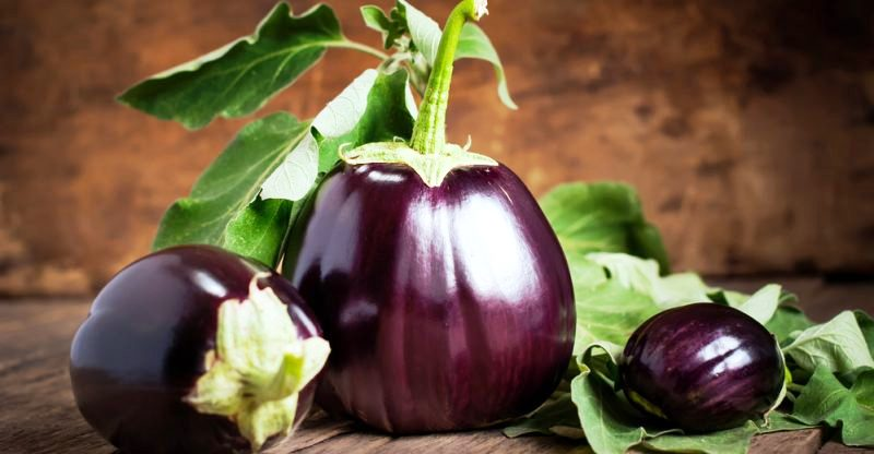 New Variety of egg plant