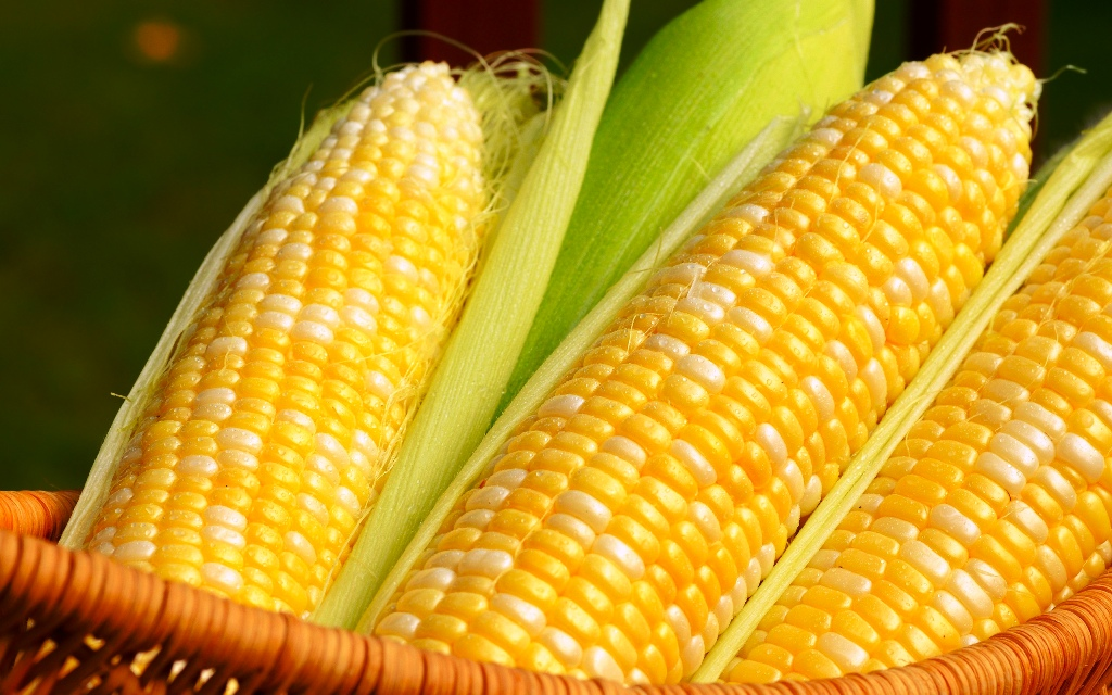 Maize Farmers can storage with less rental