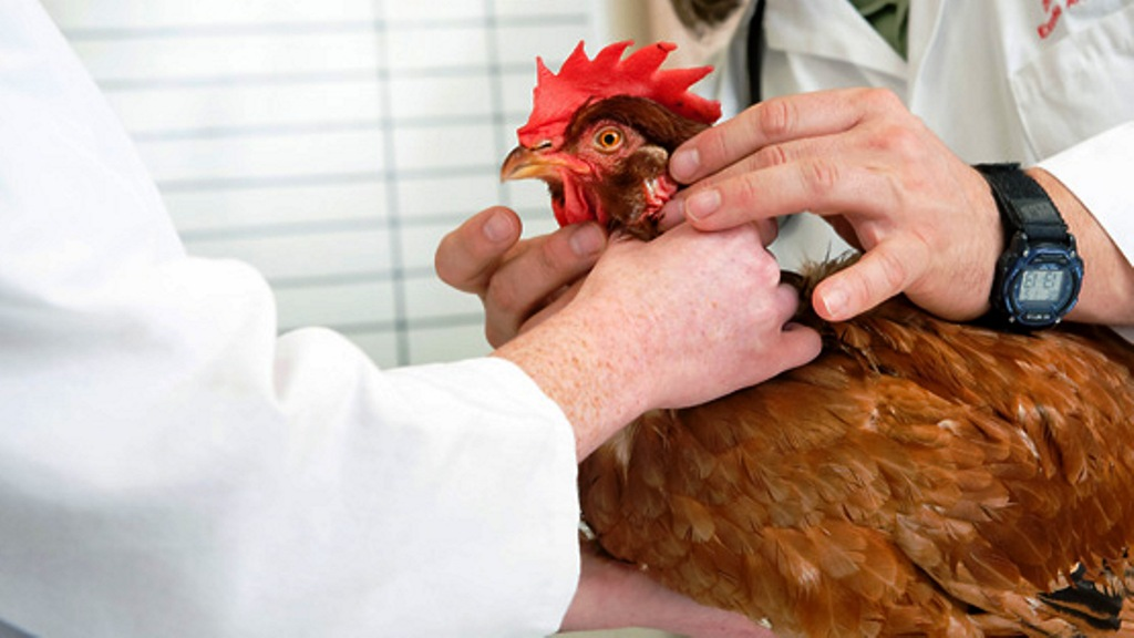 poultry specialized camp organised by TN medical college
