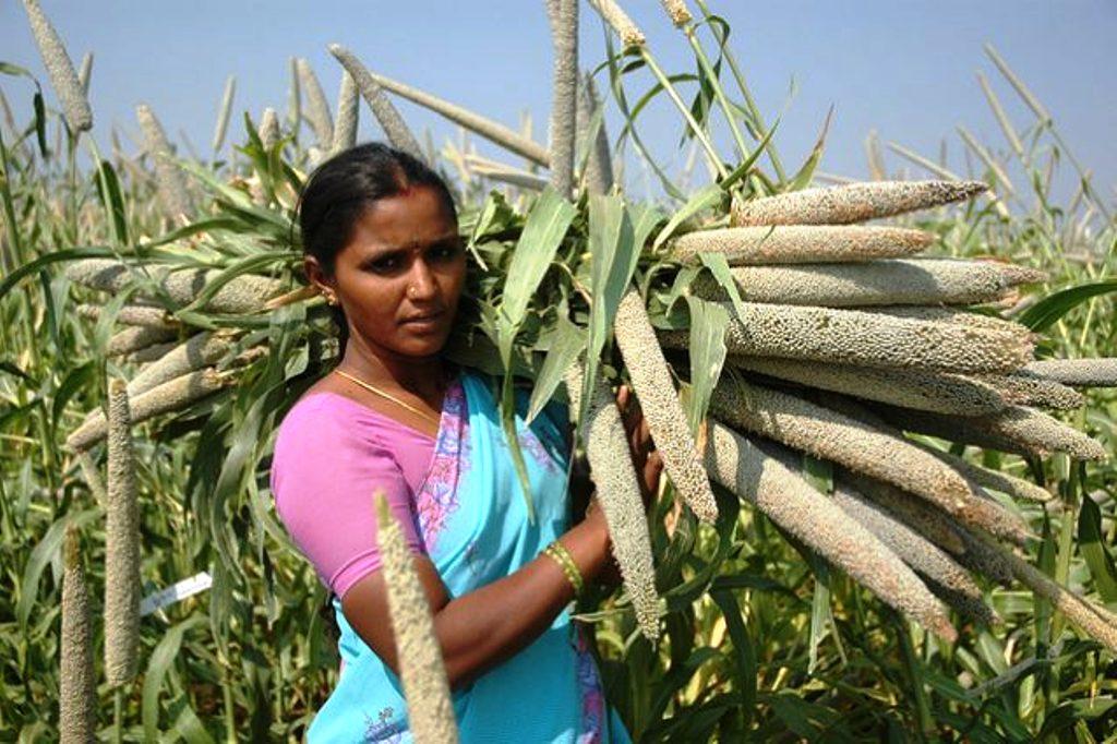 Millet Farming