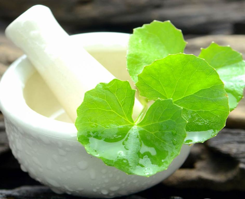 Medicinal Ayurvedic Herb