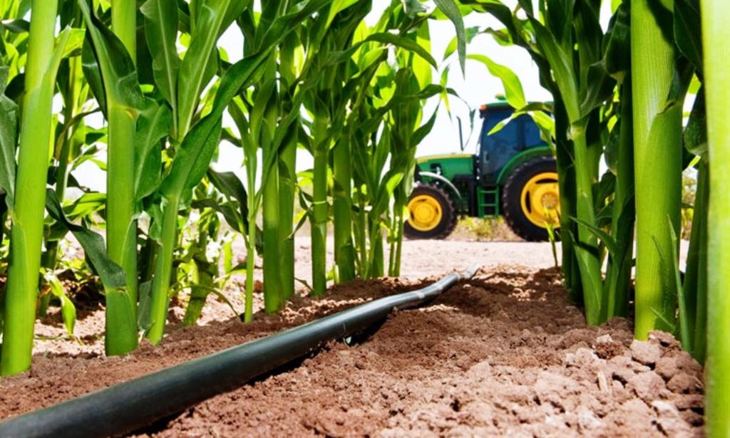 Subsurface drip irrigation