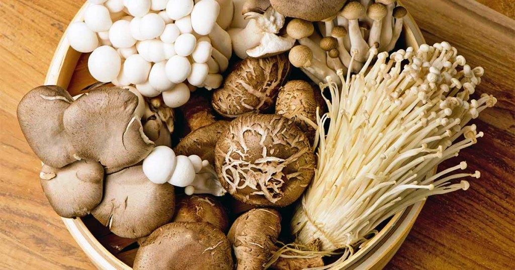 the best mushroom growing kit