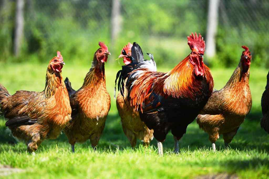 Free poultry farming workshop