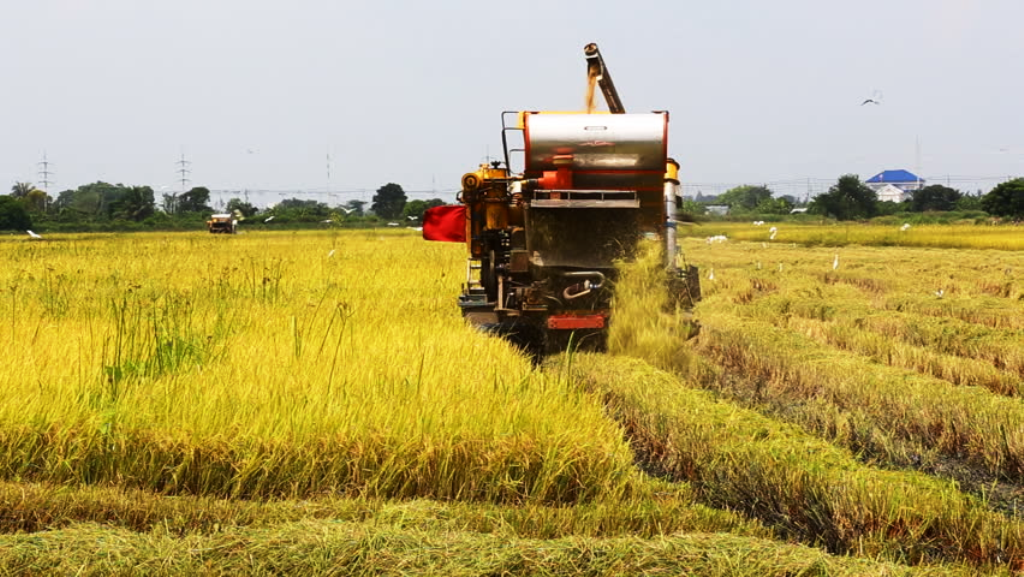 Paddy Harvesting with the help of Machine